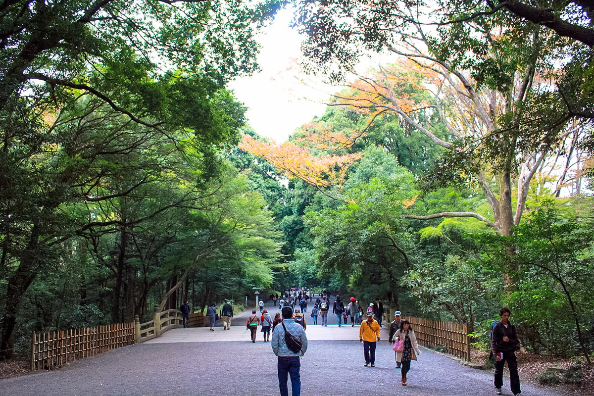 path towards Meiji Shrine | Shichi-Go-San: Tokyo's most colourful festival in November • The Petite Wanderess