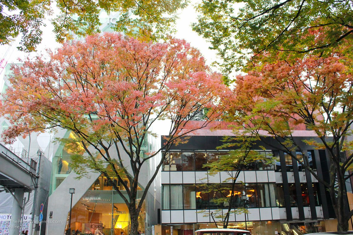 autumn trees in Tokyo | How the First Solo Trip Changed Me • The Petite Wanderess