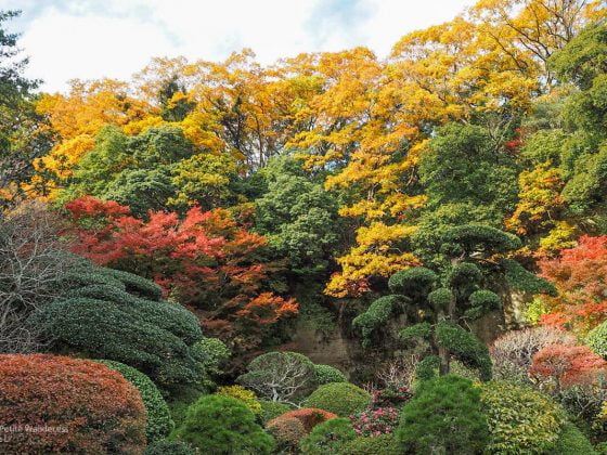 autumn foliage at Hokokuji | Kamakura Day Trip in autumn • The Petite Wanderess