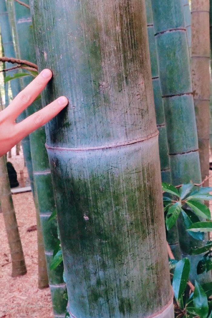 moso bamboo   Kamakura Day Trip in autumn • The Petite Wanderess