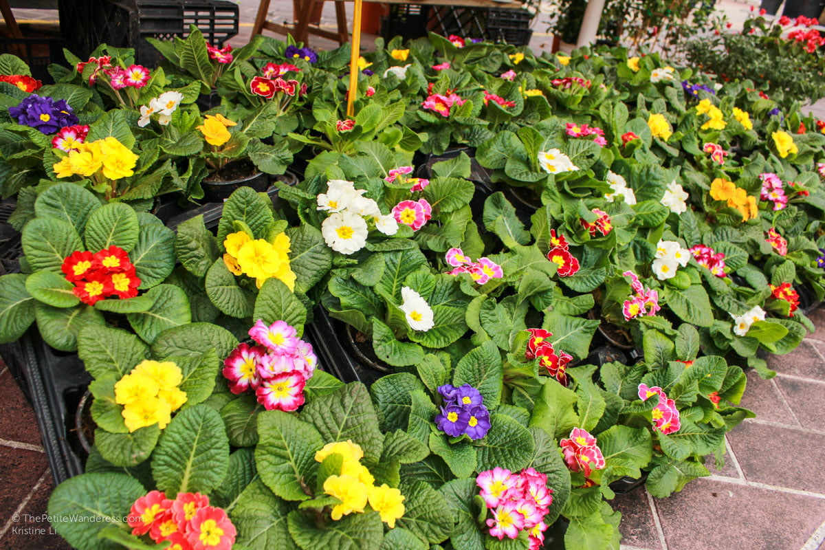plants & flowers for sale at Flower Market, Nice   Things to Do in Nice • The Petite Wanderess