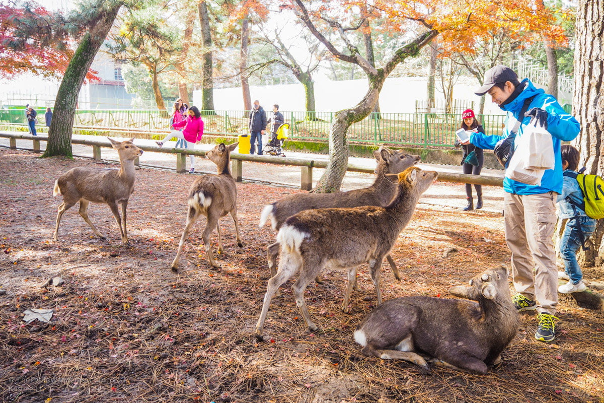 Nara Day Trip from Kyoto • The Petite Wanderess