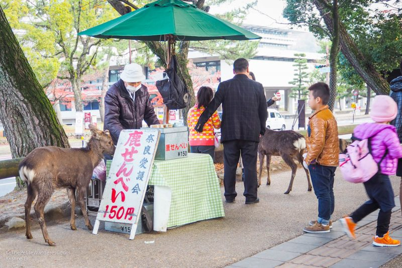 deer | Nara Day Trip from Kyoto • The Petite Wanderess