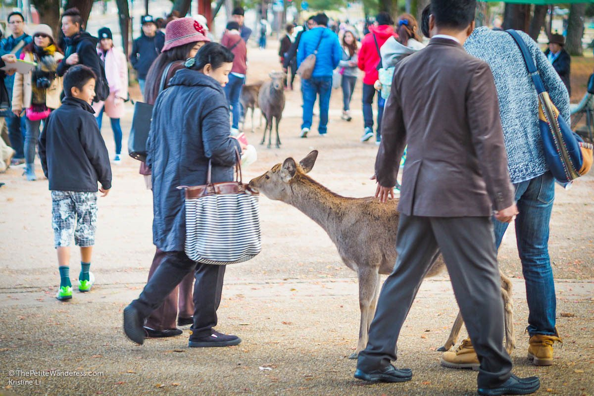 Nara deer and tourists | Nara Day Trip from Kyoto • The Petite Wanderess