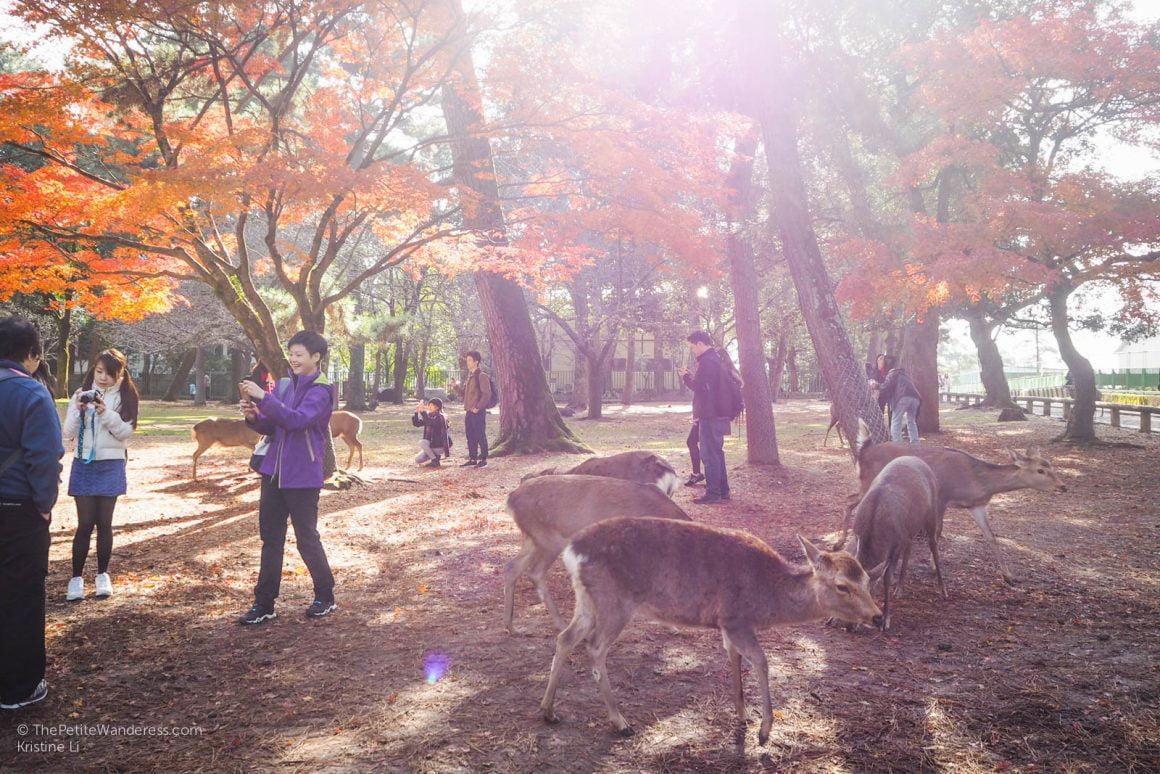 deer and tourists at Nara Park | Nara Day Trip from Kyoto • The Petite Wanderess