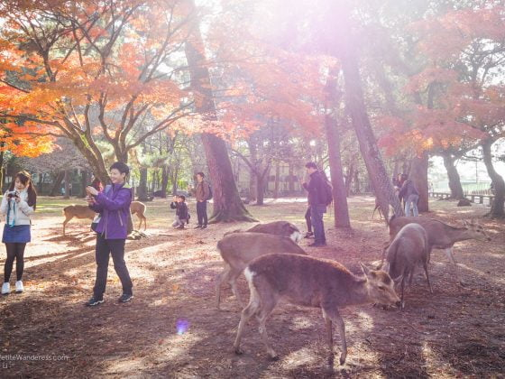 deer and tourists at Nara Park | Nara Day Trip from Kyoto • The Petite Wanderess