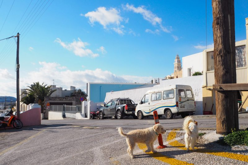 dogs along the road at Fira | Santorini in shades of blue & white • The Petite Wanderess