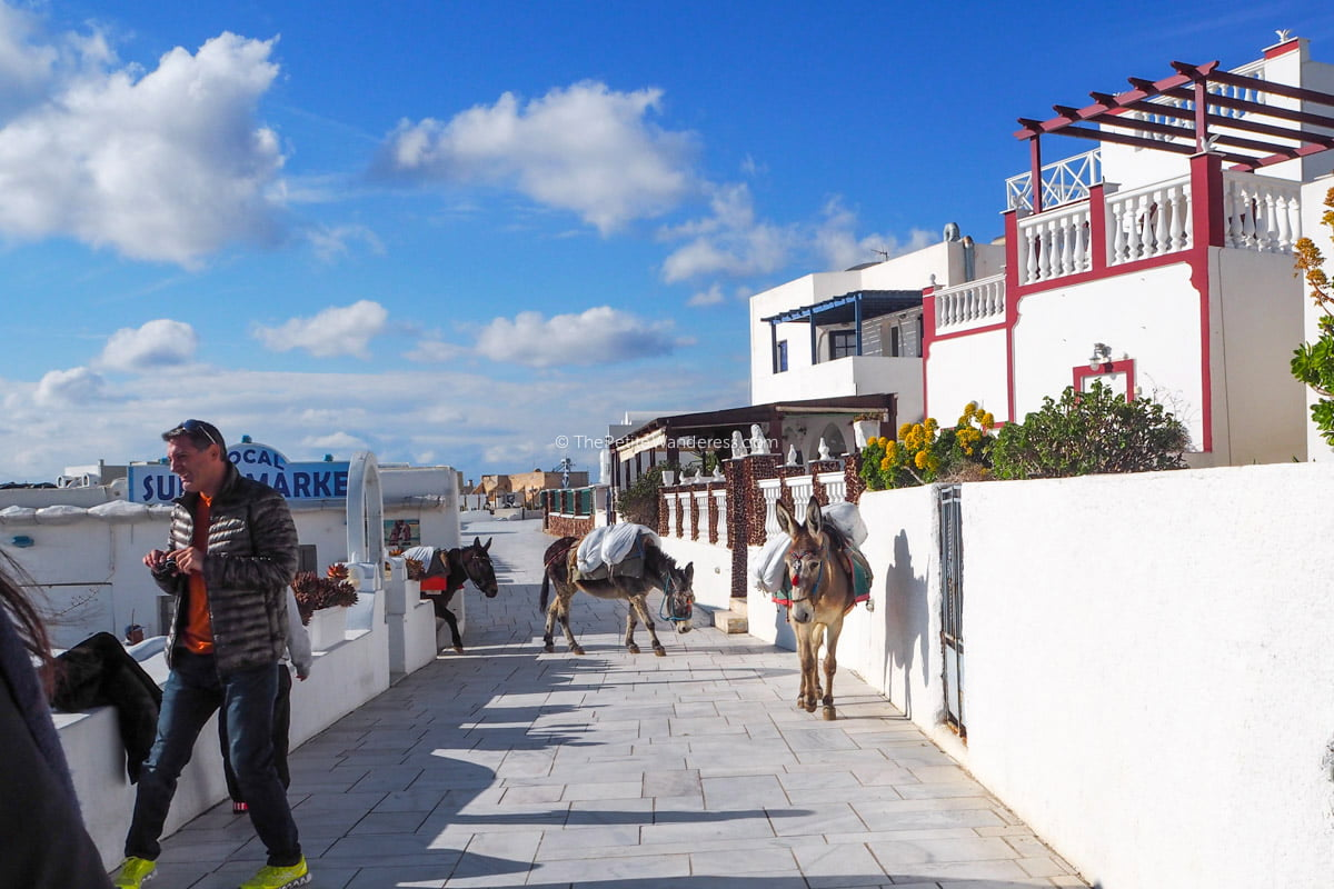 donkeys at Oia | Santorini in shades of blue & white • The Petite Wanderess