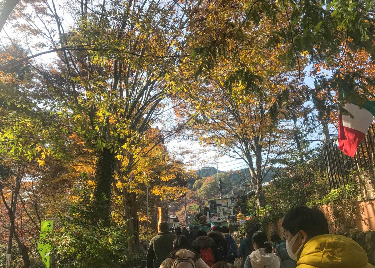 autumn foliage, Mount Takao