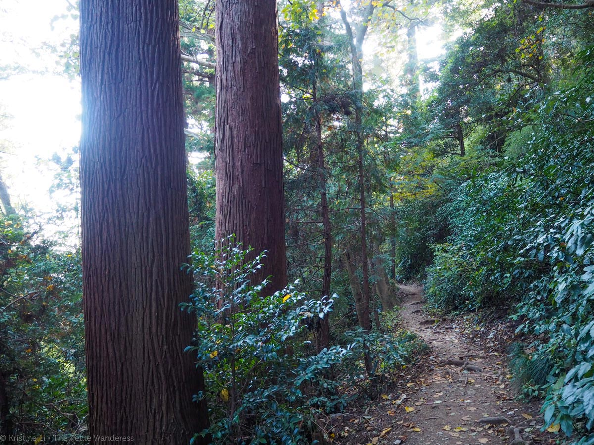 forest in Mount Takao