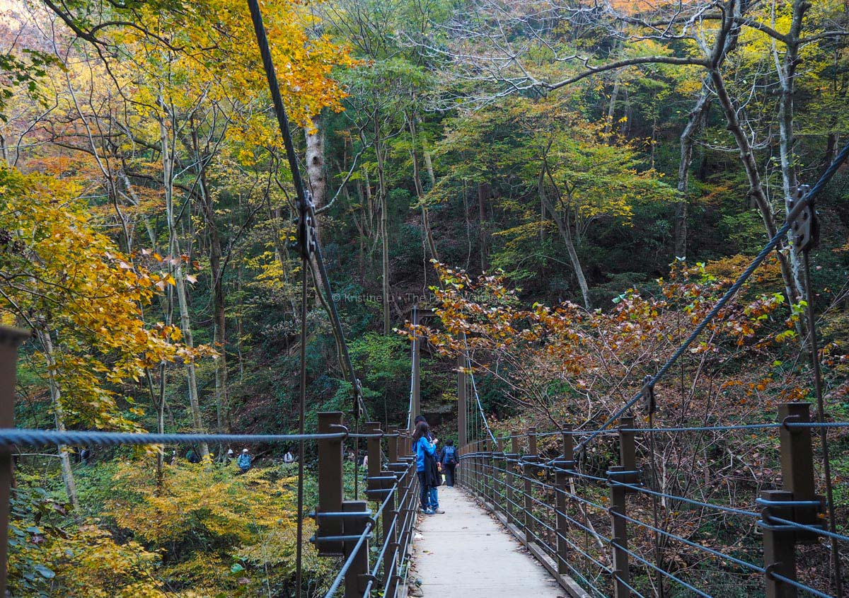 suspension bridge, Mount Takao