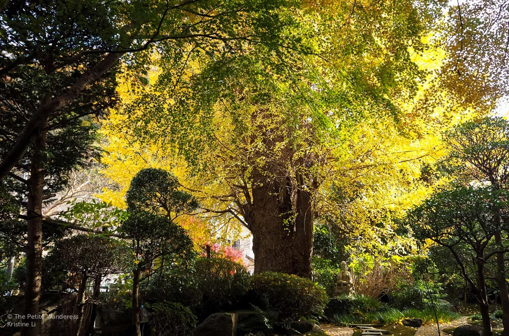 Hokoku-ji | Kamakura Day Trip in autumn • The Petite Wanderess