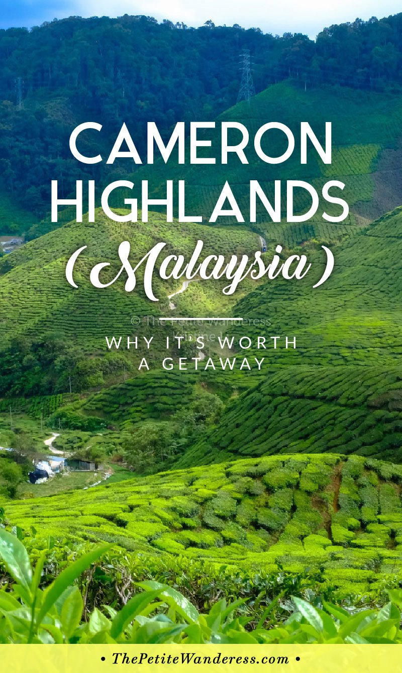 Things to do at Cameron Highlands, Malaysia • The Petite Wanderess
