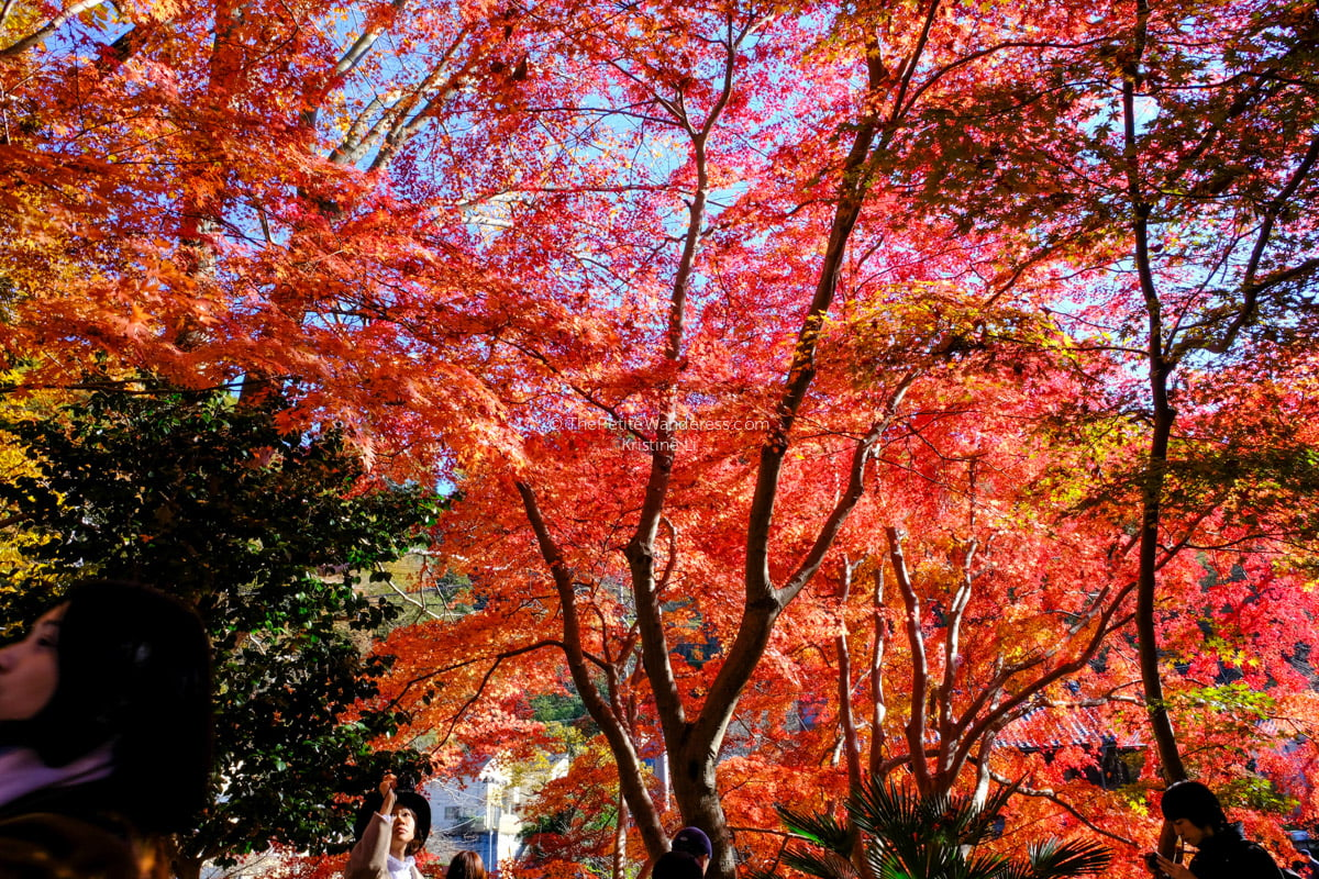 Stunning photos of autumn in Japan • The Petite Wanderess