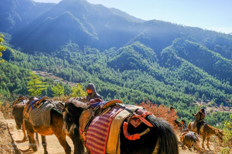 Should you take a horse to Tiger's Nest? • The Petite Wanderess