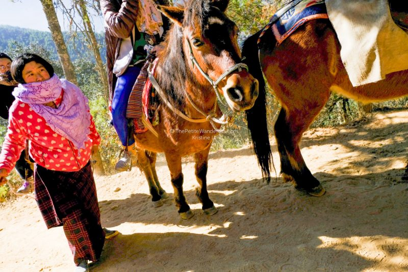 horses going to Tiger's Nest, Bhutan