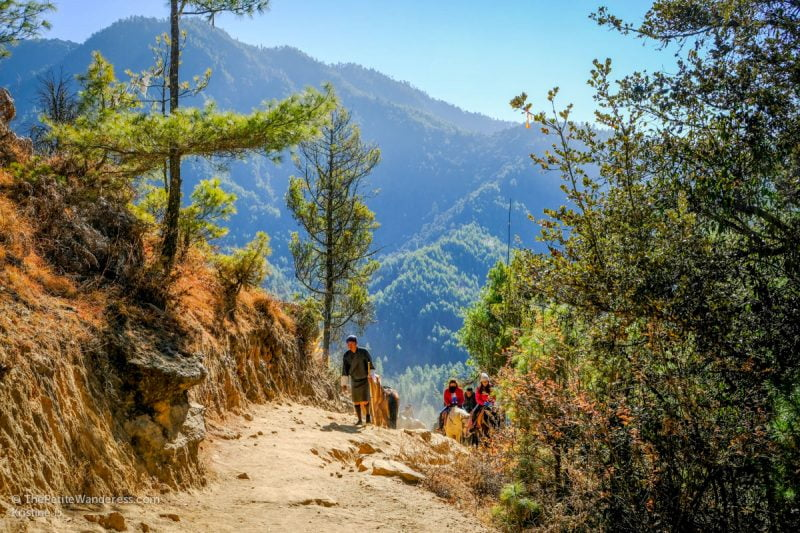 trail and horses to Tiger's Nest, Bhutan • The Petite Wanderess