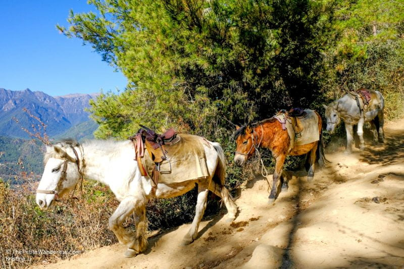 horses coming down from Tiger's Nest, Bhutan • The Petite Wanderess