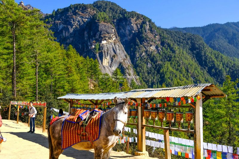 horse and prayer wheels at Paro Taktsang Monastery viewing point