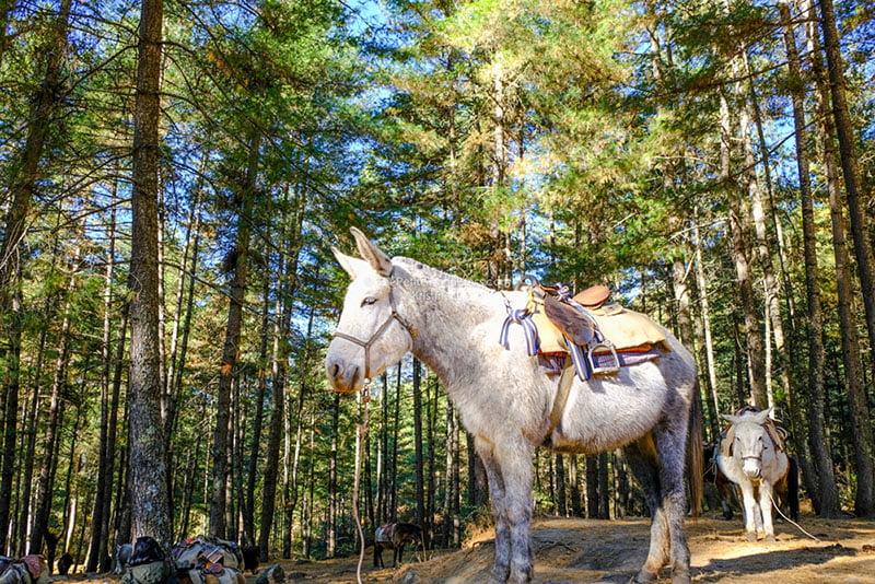 Hiking to Paro Taktsang (Tiger's Nest) in Bhutan • The Petite Wanderess
