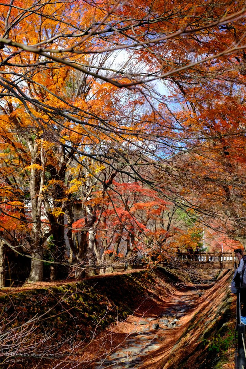 Momiji Tunnel | Things to do in Kawaguchiko, Japan • The Petite Wanderess