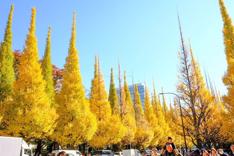 Ginkyo Avenue | Best Day Trips from Tokyo during Autumn • The Petite Wanderess