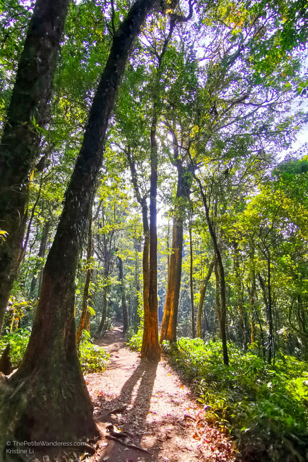 Kew Mae Pan trail | Hiking & Waterfalls at a Day Trip to Doi Inthanon, Chiang Mai • The Petite Wanderess