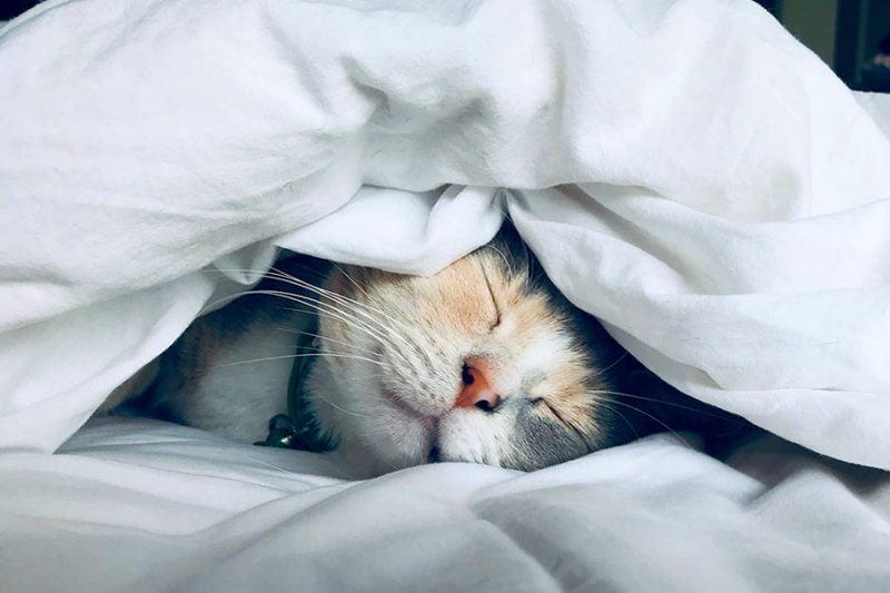 cat | How to Boost Immunity at Home to Lower Risks of CoronaVirus • The Petite Wanderess